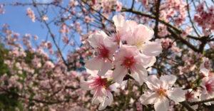 opruimen voorjaar